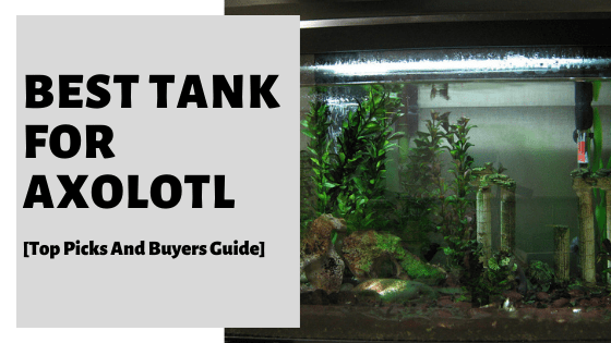 Best Tank For Axolotl [Top Picks And Buyers Guide]