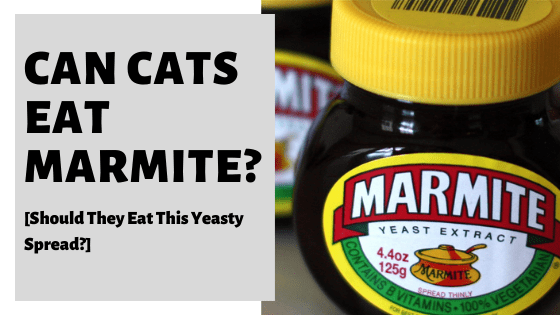 Can Cats Eat Marmite? [Should They Eat This Yeasty Spread?]