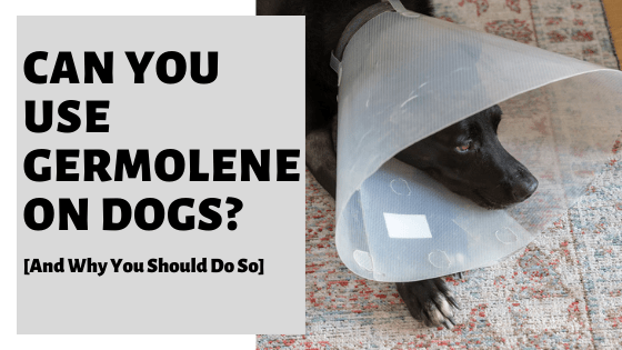 Can You Use Germolene On Dogs? [You'll Be Relieved You Checked]