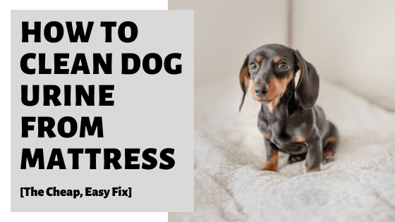 How To Clean Dog Urine From Mattress [The Cheap, Easy Fix]