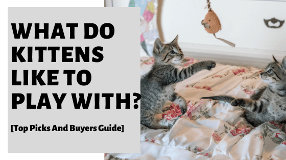 What Do Kittens Like To Play With? [And How To Do So Safely]