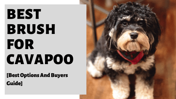 Best Brush For Cavapoo [Best Options And Buyers Guide]