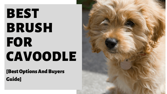 Best Brush For Cavoodle [Best Options And Buyers Guide]