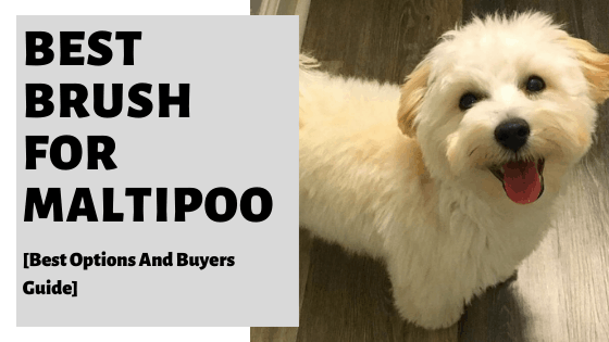 Best Brush For Maltipoo [Best Options And Buyers Guide]