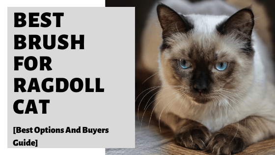 Best Brush For Ragdoll Cat [Best Options And Buyers Guide]
