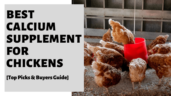 Best Calcium Supplement For Chickens [Top Picks & Buyers Guide]