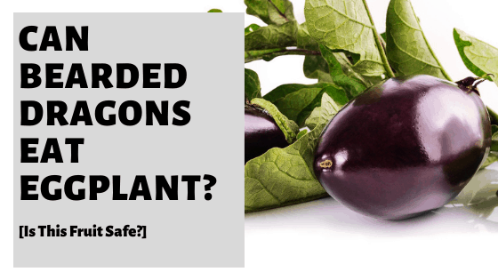 Can Bearded Dragons Eat Eggplant? [Is This Fruit Safe?]