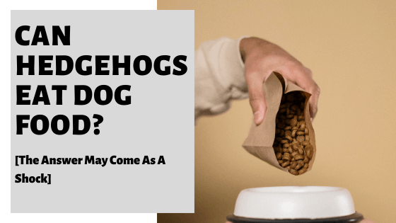 Can Hedgehogs Eat Dog Food? [The Answer May Come As A Shock]