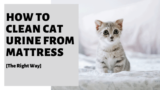 How To Clean Cat Urine From Mattress [The Right Way]