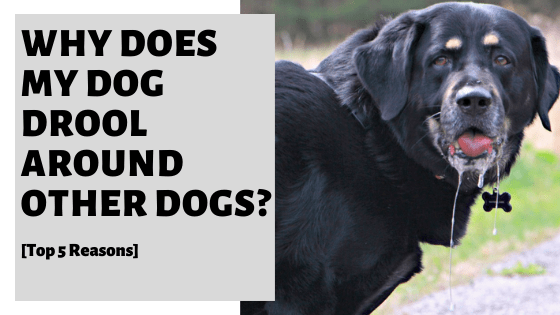 Why Does My Dog Drool Around Other Dogs? [Top 5 Reasons]