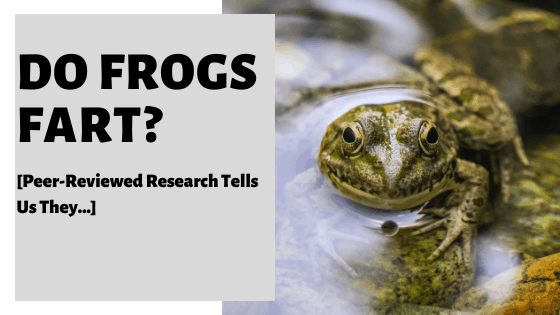 Do Frogs Fart? [Peer-Reviewed Research Tells Us They...]