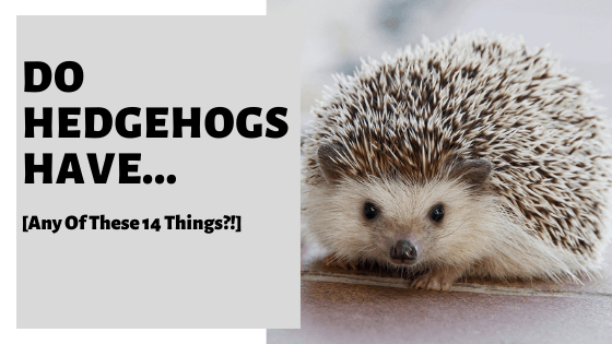Do Hedgehogs Have... [Any Of These 14 Things?!]