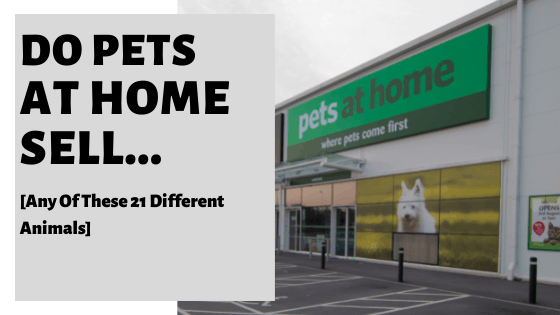 Do Pets At Home Sell... [Any Of These 21 Different Animals]