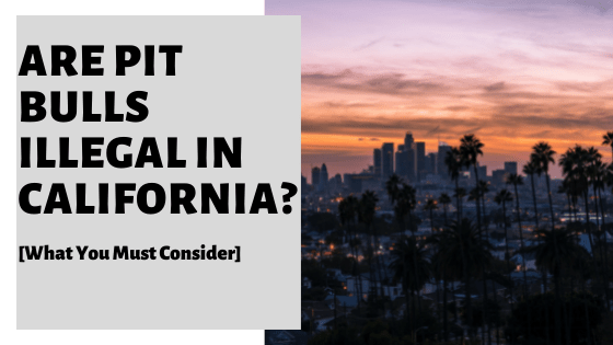 Are Pit Bulls Illegal In California? [What You Must Consider]
