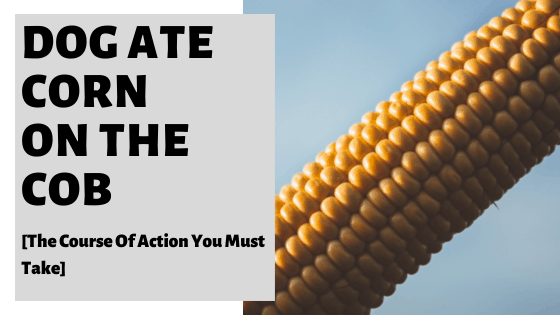 Dog Ate Corn On The Cob [The Course Of Action You Must Take]
