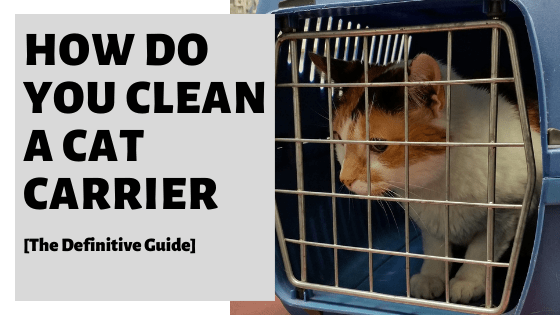 How Do You Clean A Cat Carrier [The Definitive Guide]