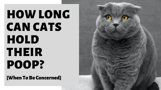 How Long Can Cats Hold Their Poop? [When To Be Concerned]