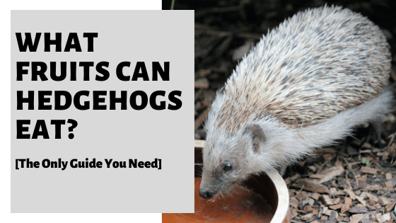 What Fruits Can Hedgehogs Eat? [The Only Guide You Need]