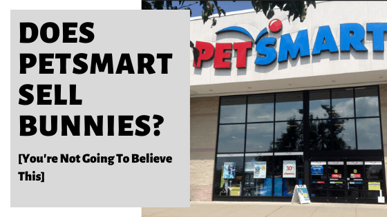 Does PetSmart Sell Bunnies? [You're Not Going To Believe This]