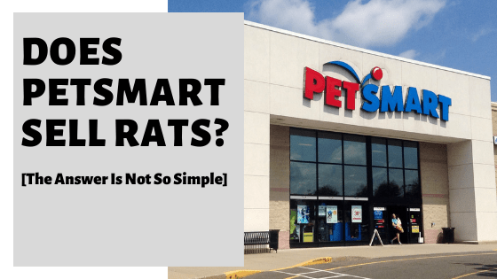 Does PetSmart Sell Rats? [The Answer Is Not So Simple]