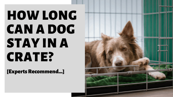 How Long Can A Dog Stay In A Crate? [Experts Recommend...]