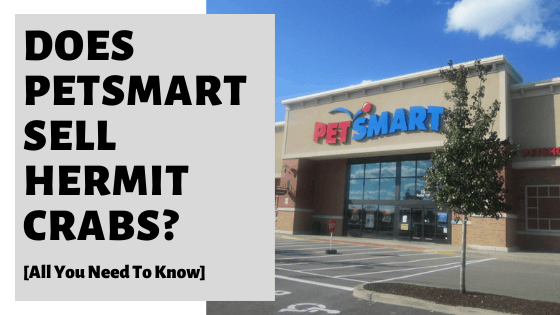 Does PetSmart Sell Hermit Crabs [All You Need To Know]