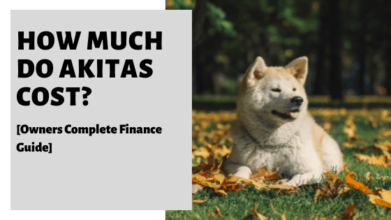 How Much Do Akitas Cost? [Owners Complete Finance Guide]