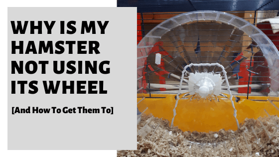 Why Is My Hamster Not Using Its Wheel [And How To Get Them To]