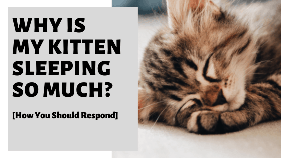 Why Is My Kitten Sleeping So Much [How You Should Respond]