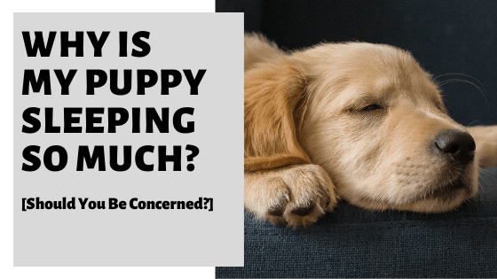 Why Is My Puppy Sleeping So Much? [Should You Be Concerned?]