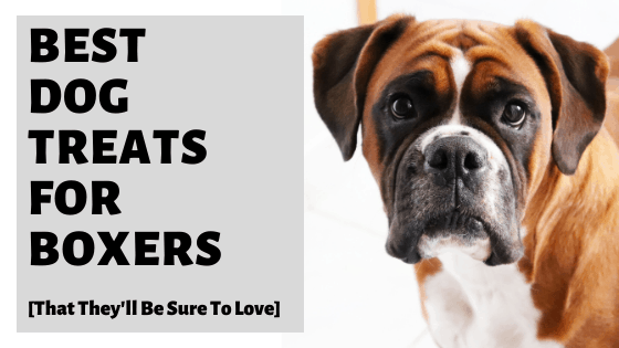 Best Dog Treats For Boxers [That They'll Be Sure To Love]