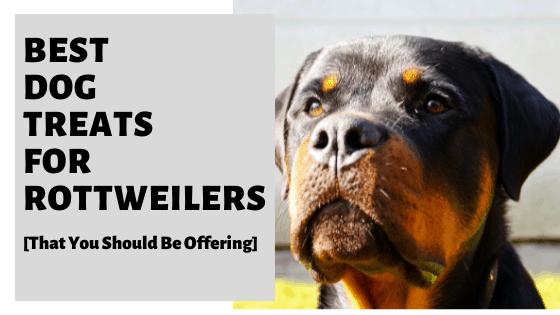 Best Dog Treats For Rottweilers [That You Should Be Offering]