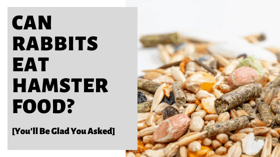 Can Rabbits Eat Hamster Food [You'll Be Glad You Asked]