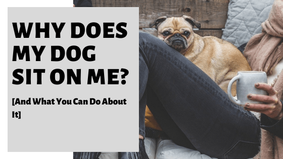 Why Does My Dog Sit On Me [And What You Can Do About It]