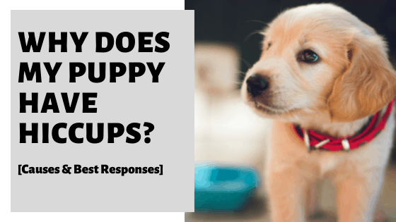Why Does My Puppy Have Hiccups? [Causes & Best Responses]