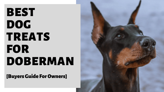 Best Dog Treats For Doberman [Buyers Guide For Owners]