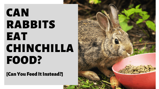 Can Rabbits Eat Chinchilla Food? [Can You Feed It Instead?]
